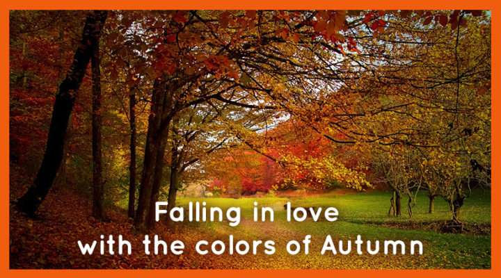 Falling in love with the colours of Autumn